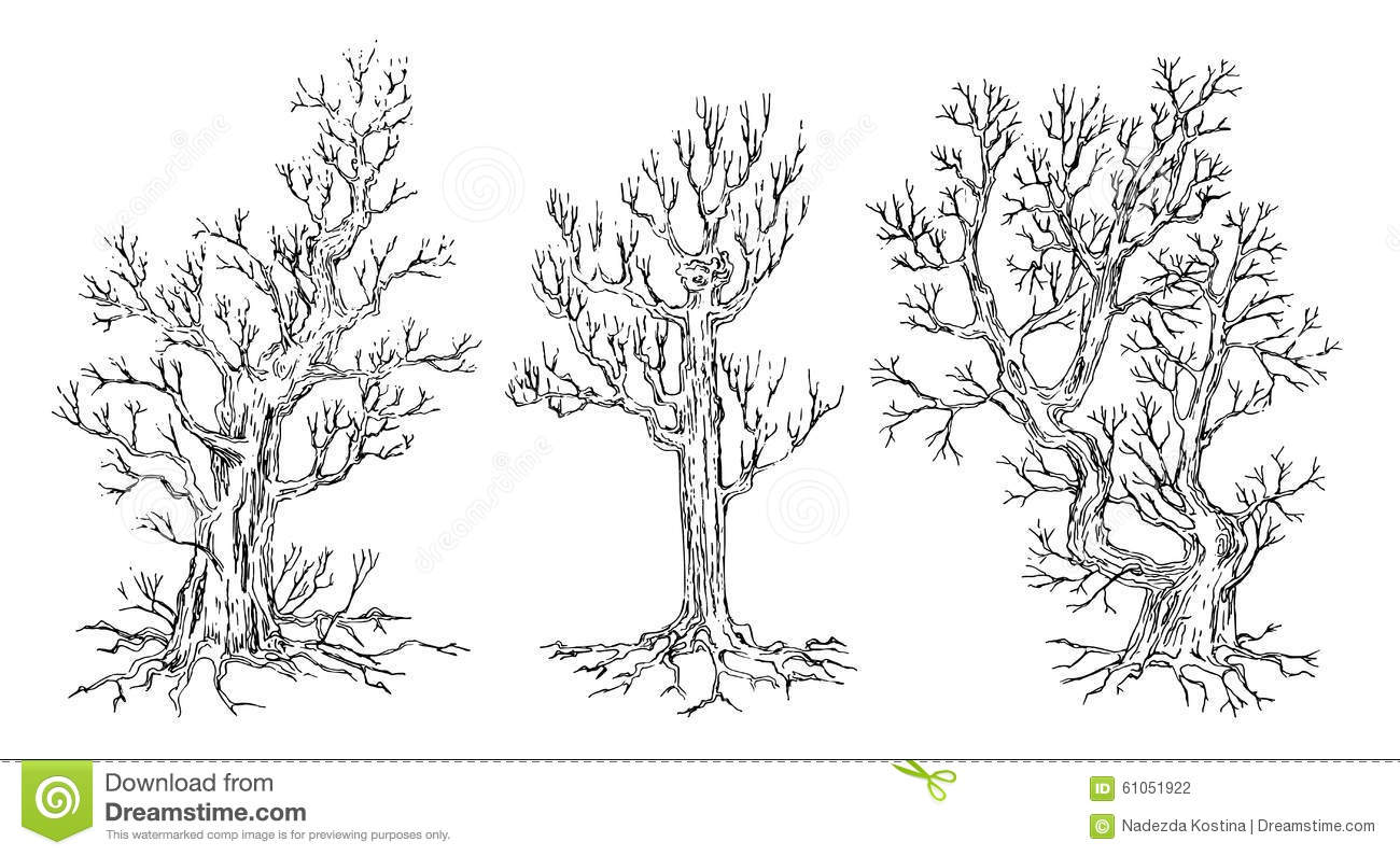 Pencil drawing of bare tree in winter stock photo for Archweb piante