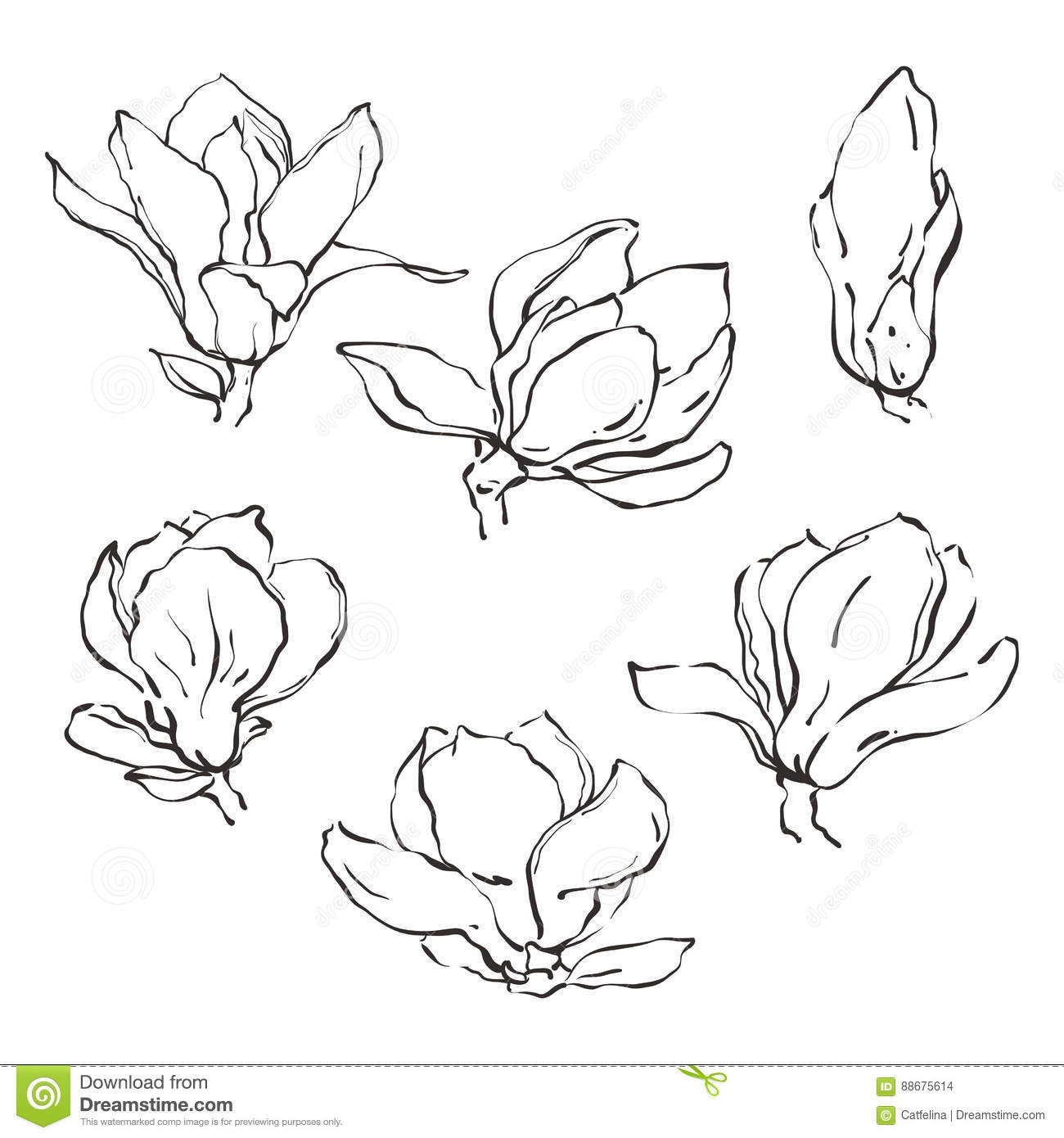 Set Of Hand Drawn Vector Magnolia Flowers In Sketch Line Style Stock