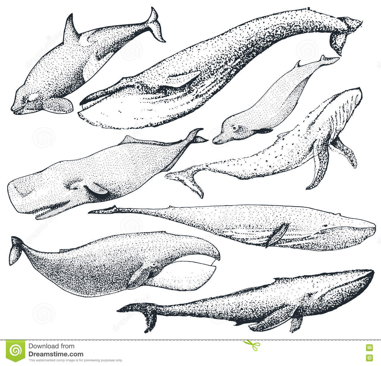 Set of hand drawn whales stock vector. Illustration of print - 78316063