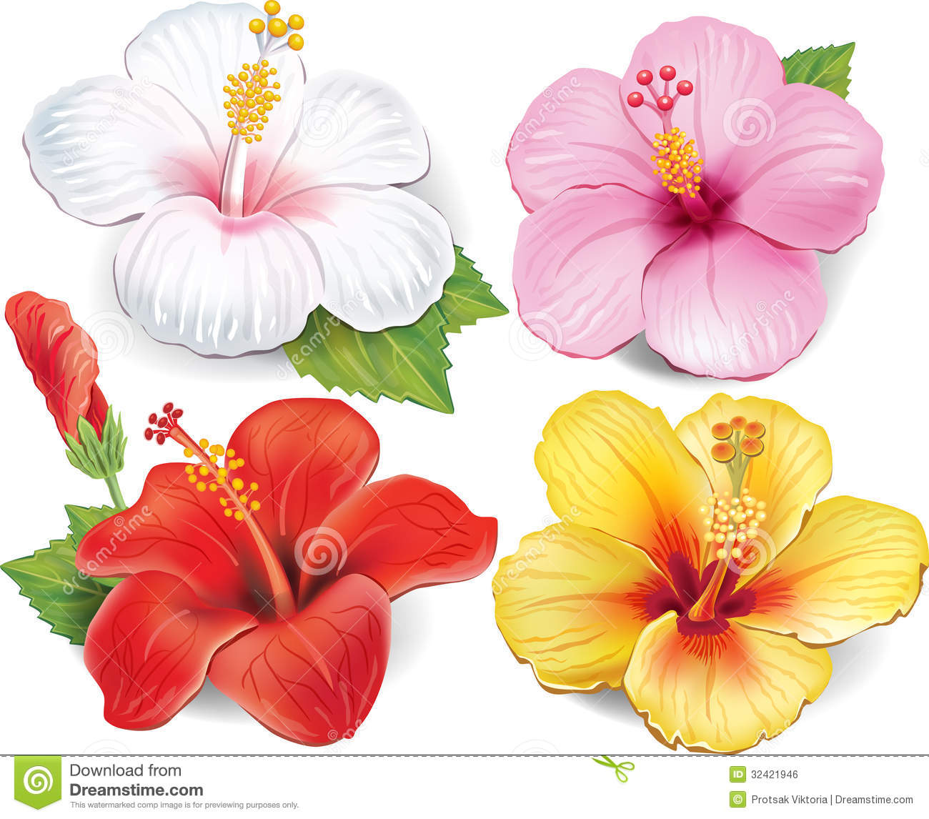Set Of Hibiscus Stock Vector Illustration Of Spring 32421946
