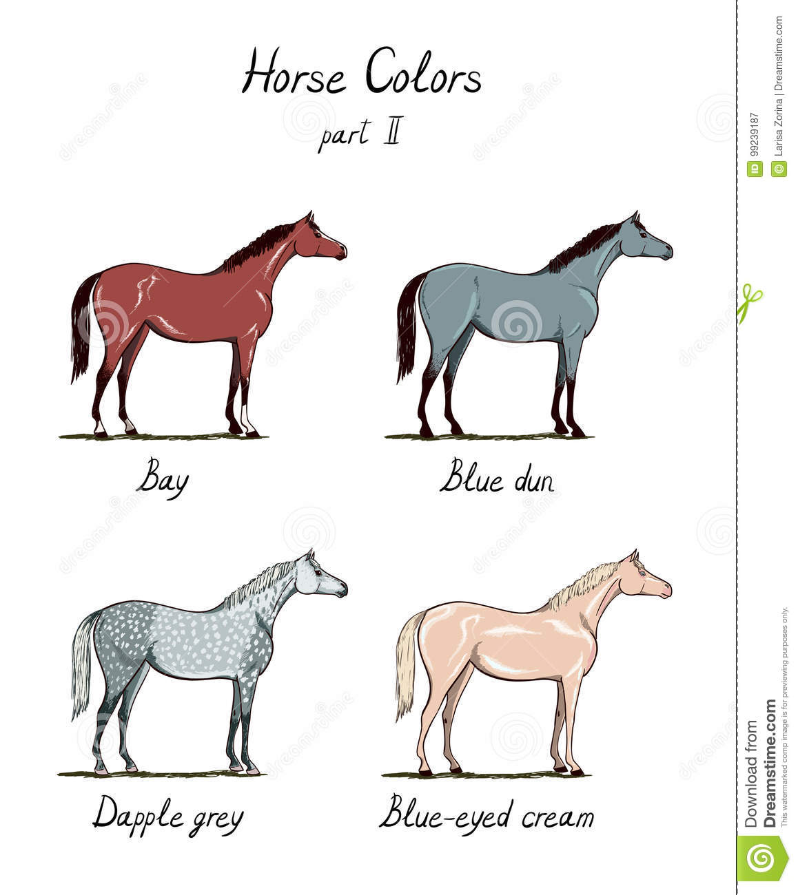 Set Of Horse Color Chart On White. Equine Coat Colors With ...