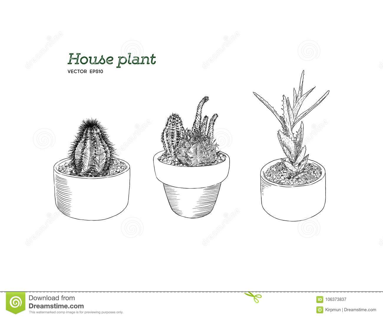 Set Of House Plant Hand Draw Sketch Vector Stock Vector Illustration Of Background Design 106373837
