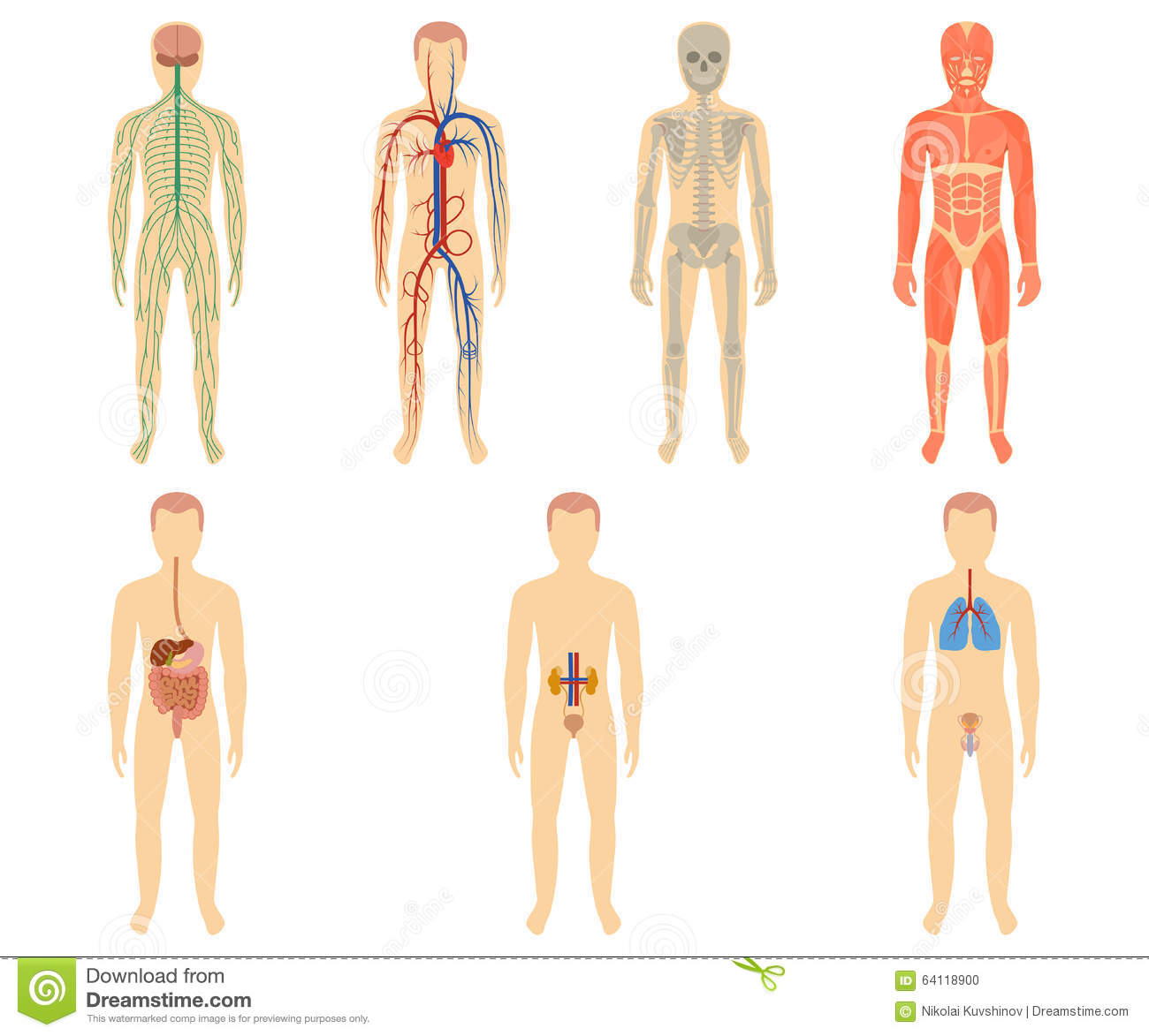 Set Of Human Organs And Systems Stock Vector - Illustration of ...