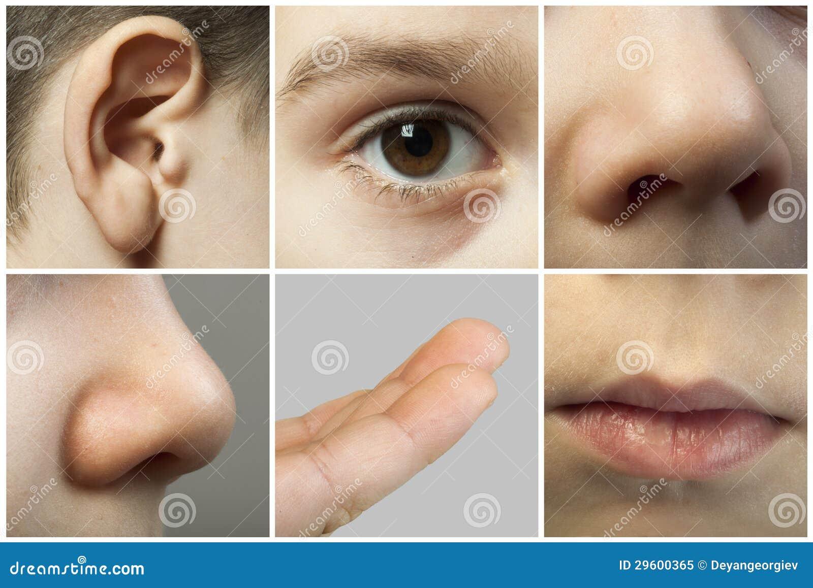 Set Of The Human Senses Royalty Free Stock Photo Image