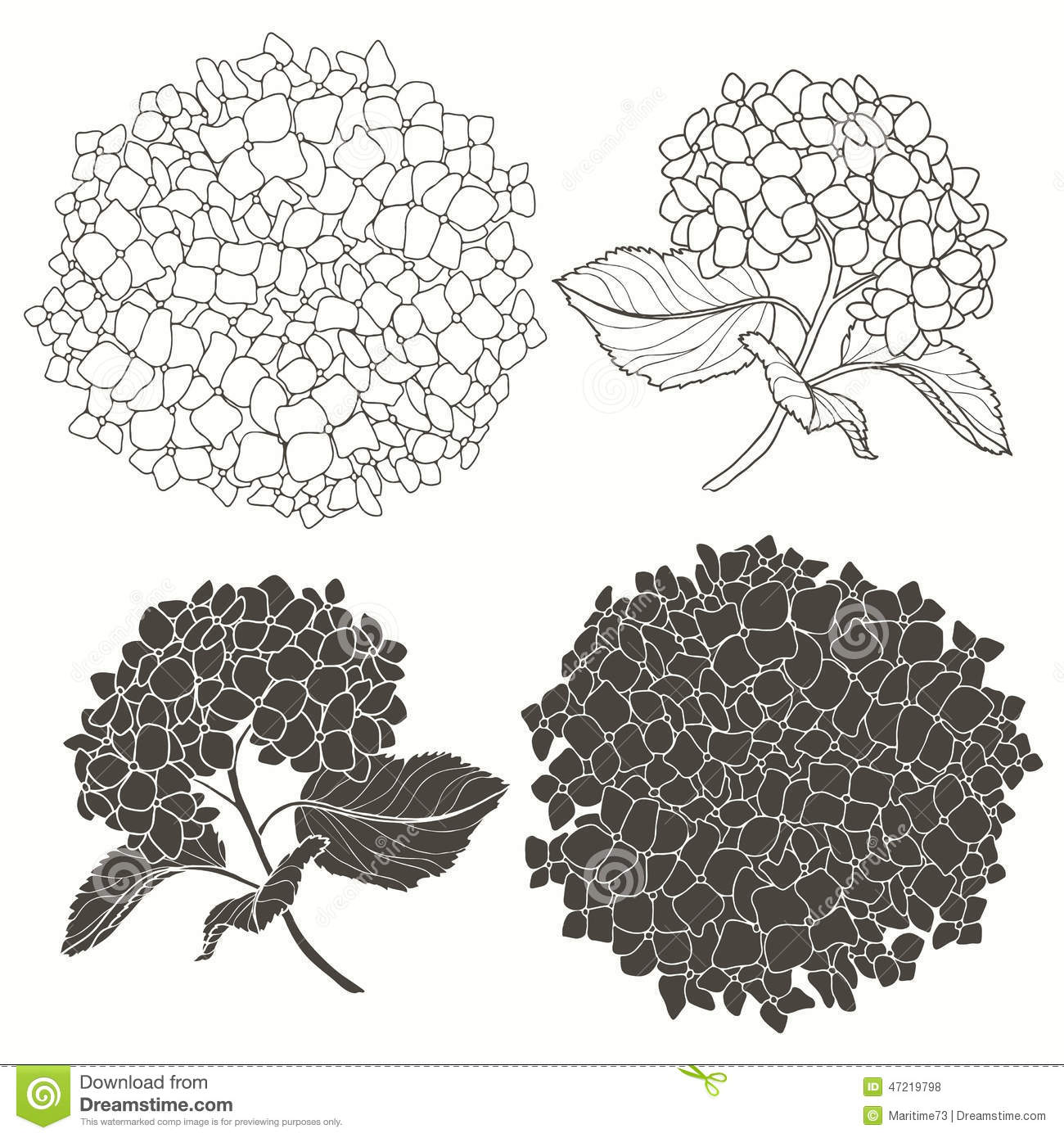 Set Of Hydrangeas Isolated On White Background Hand Drawn Vect Royalty Free  Stock Photos