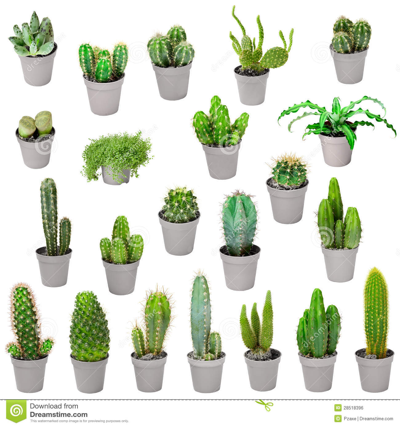 Set Of Indoor Plants In Pots Cactuses Isolated On White