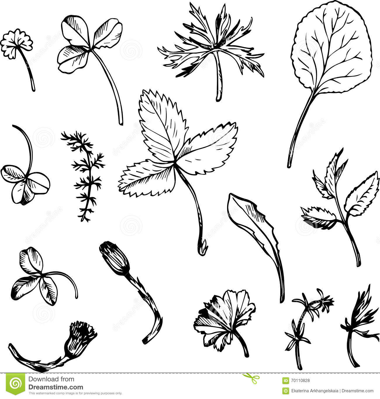 Flower Leaf Line Drawing : Set of ink drawing herbs and leaves stock vector