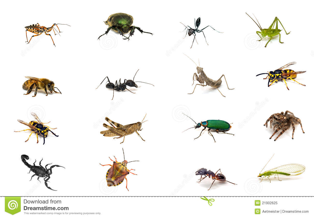 Types of antenna in insects pdf