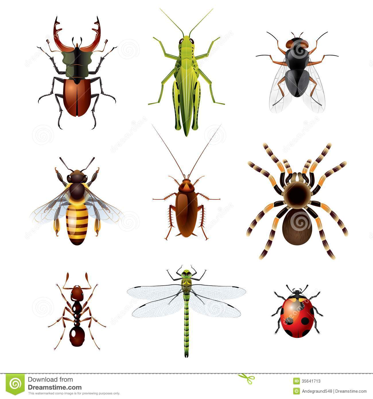 Set Of Insects On White Background Stock Photos - Image: 35641713