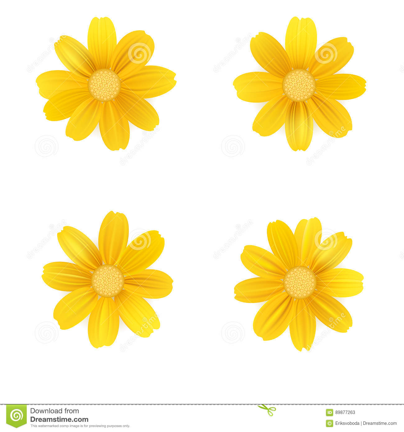 set of isolated yellow gerbera or daisy vector colorful flowers on