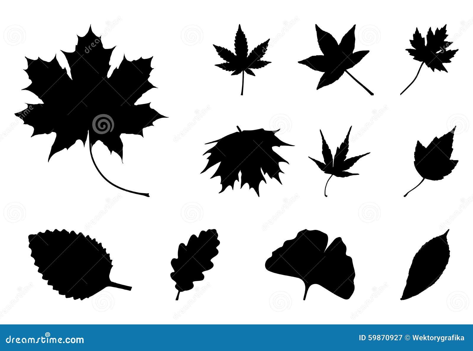 Set jesień liścia sylwetki, symbol, ikona tła ilustracyjny rekinu wektoru biel
