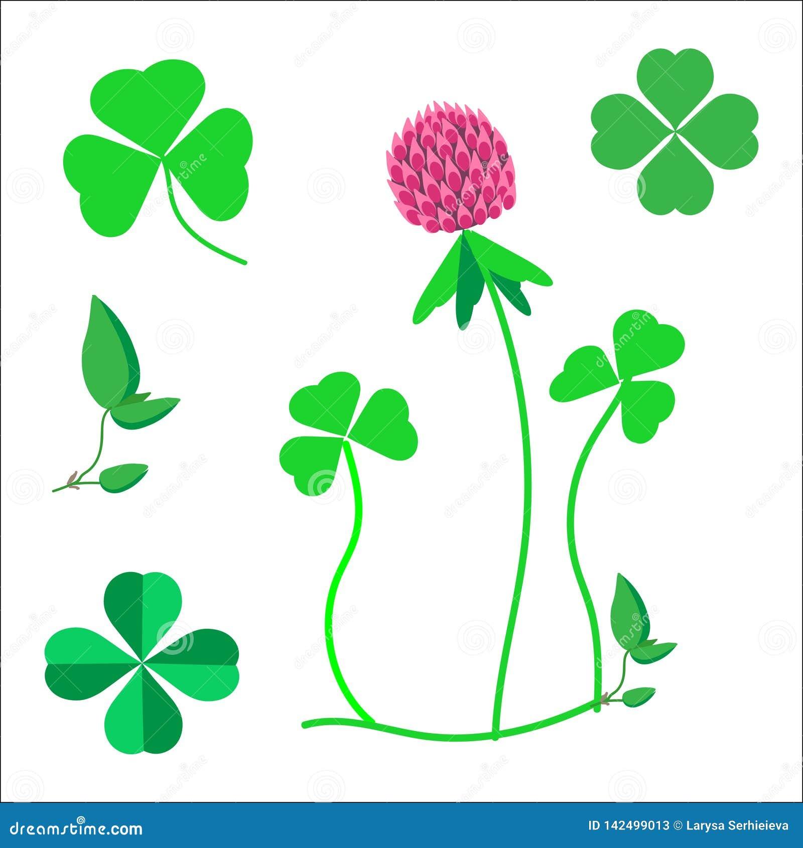 Set koniczyna opuszcza, symbol szczęście, koniczynowy kwiat
