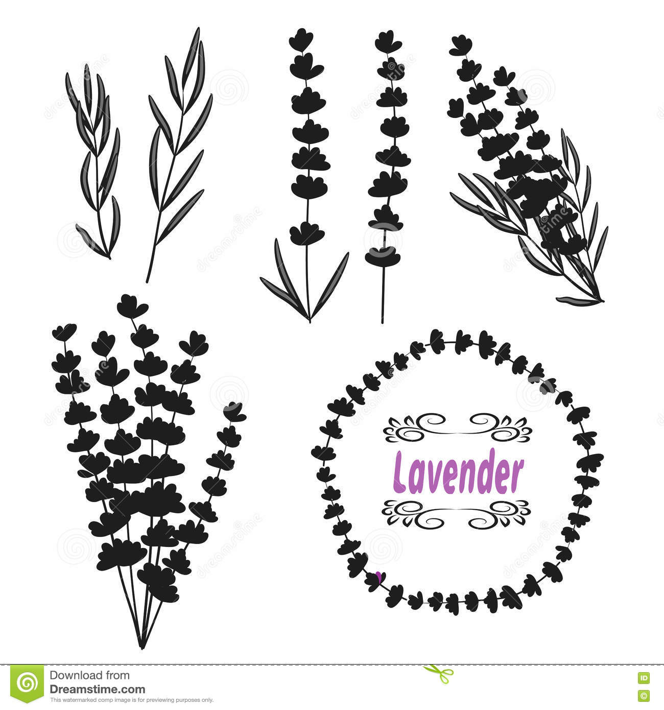 set of lavender  hand drawn bunch of lavender  lavender