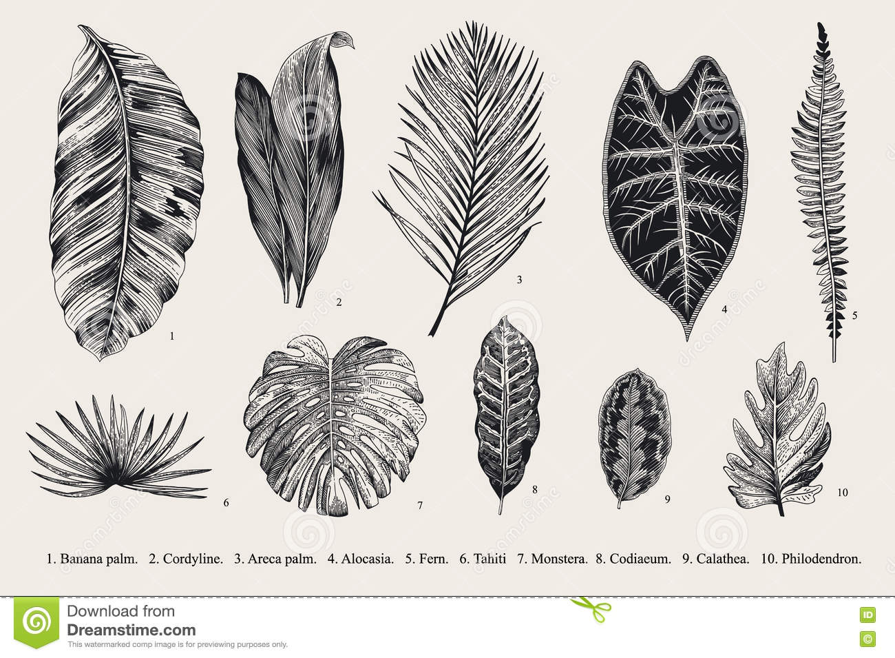 Set Leaf. Exotics. Vintage Vector Botanical Illustration ...