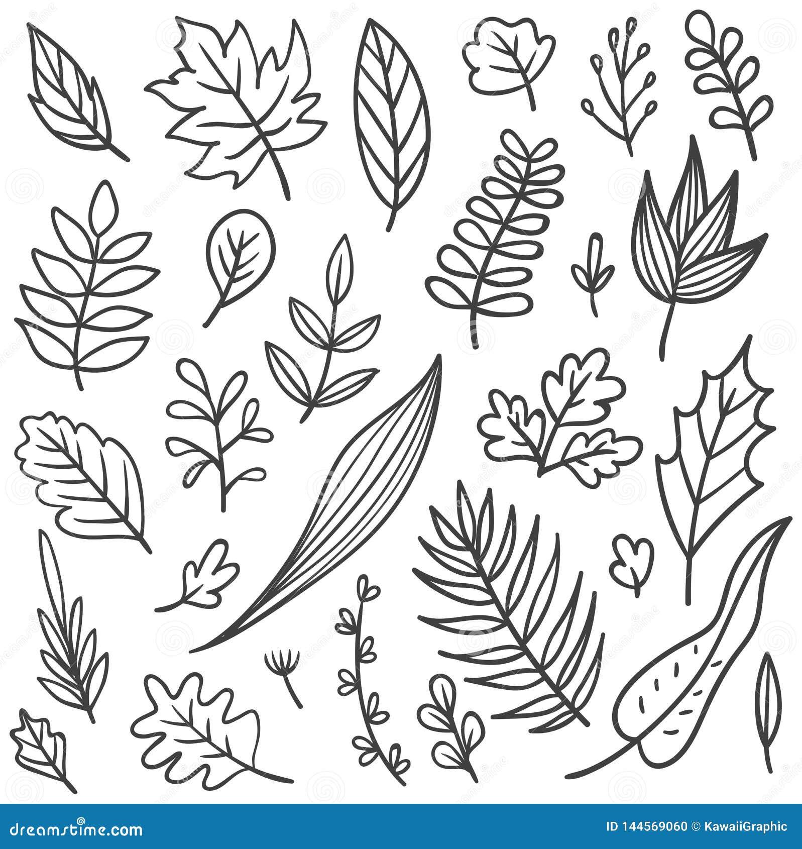 Set Of Leaves Doodle Stock Illustration Illustration Of Drawn 144569060