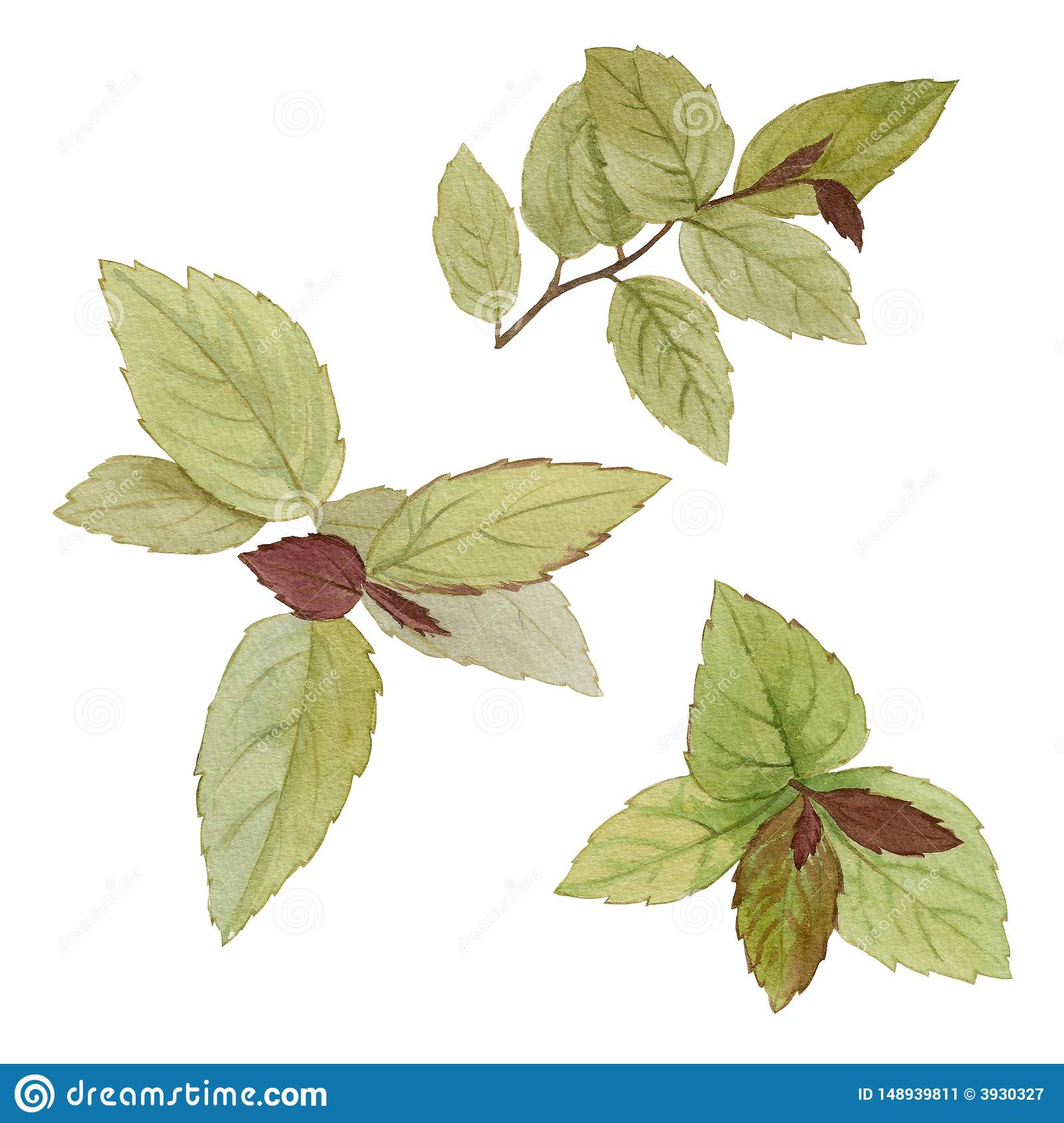 A set of leaves. Watercolor painting set of leaves on a white background. Hand draw watercolor illustration. Design element. Elega