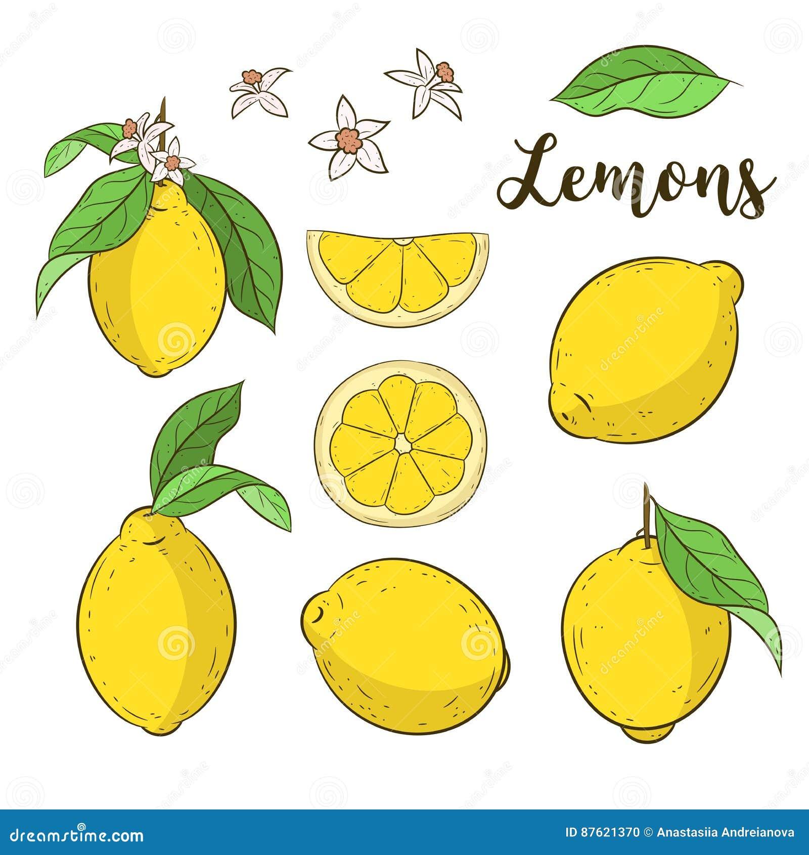 Set With Lemons Stock Illustration Illustration Of Floral 87621370