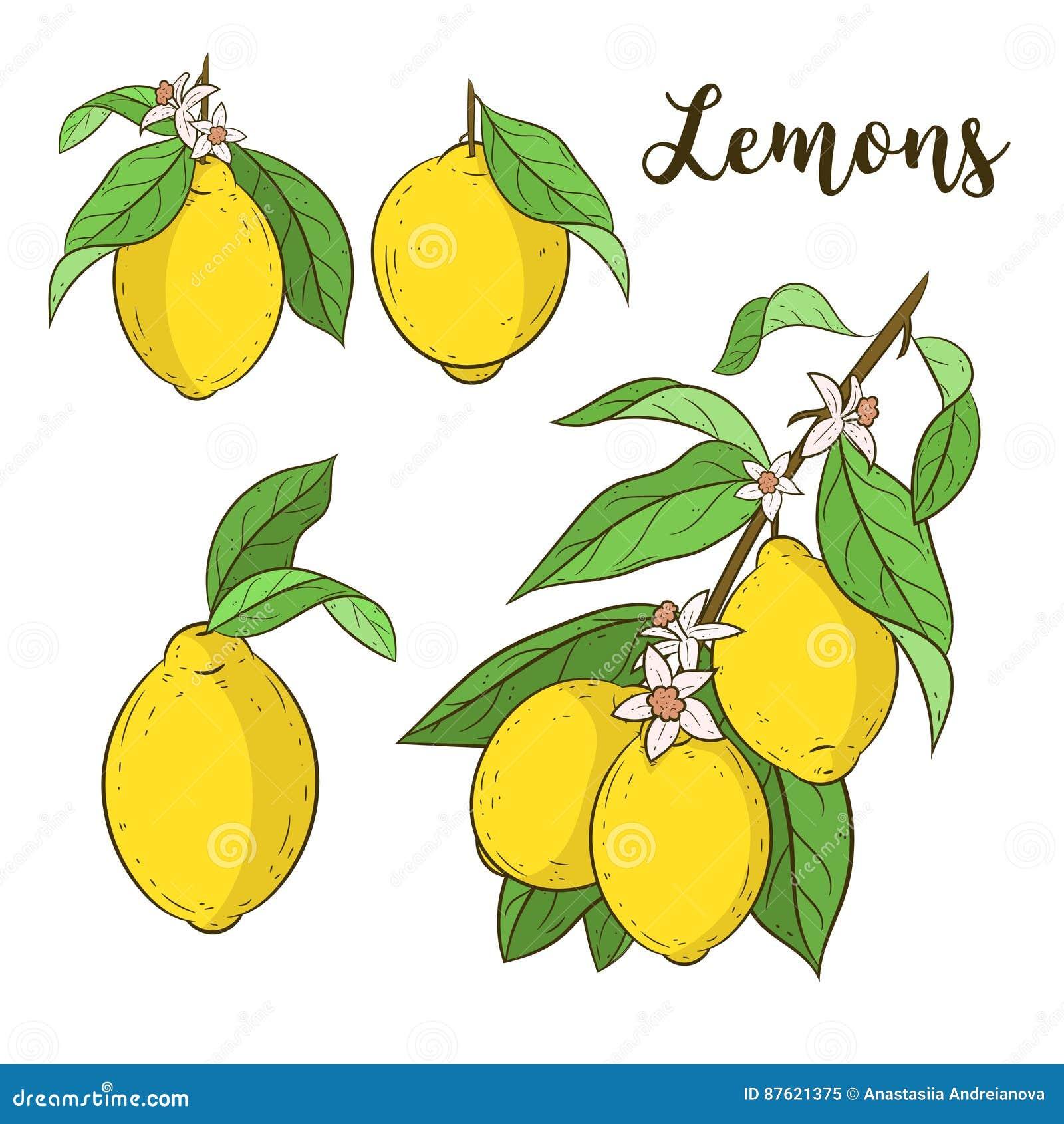 Set With Lemons Stock Illustration Illustration Of Citrus 87621375