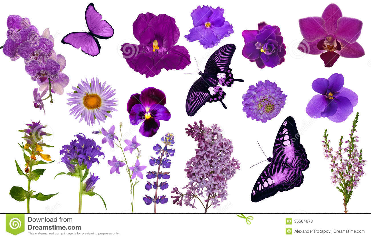 Set Of Lilac Color Butterflies And Flowers Royalty Free Stock Photos