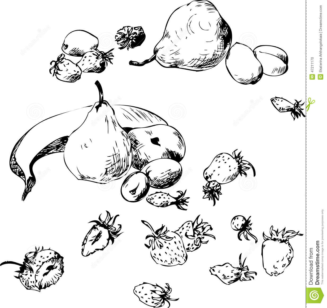 Line Art Ink : Set of line drawing fruits stock vector image