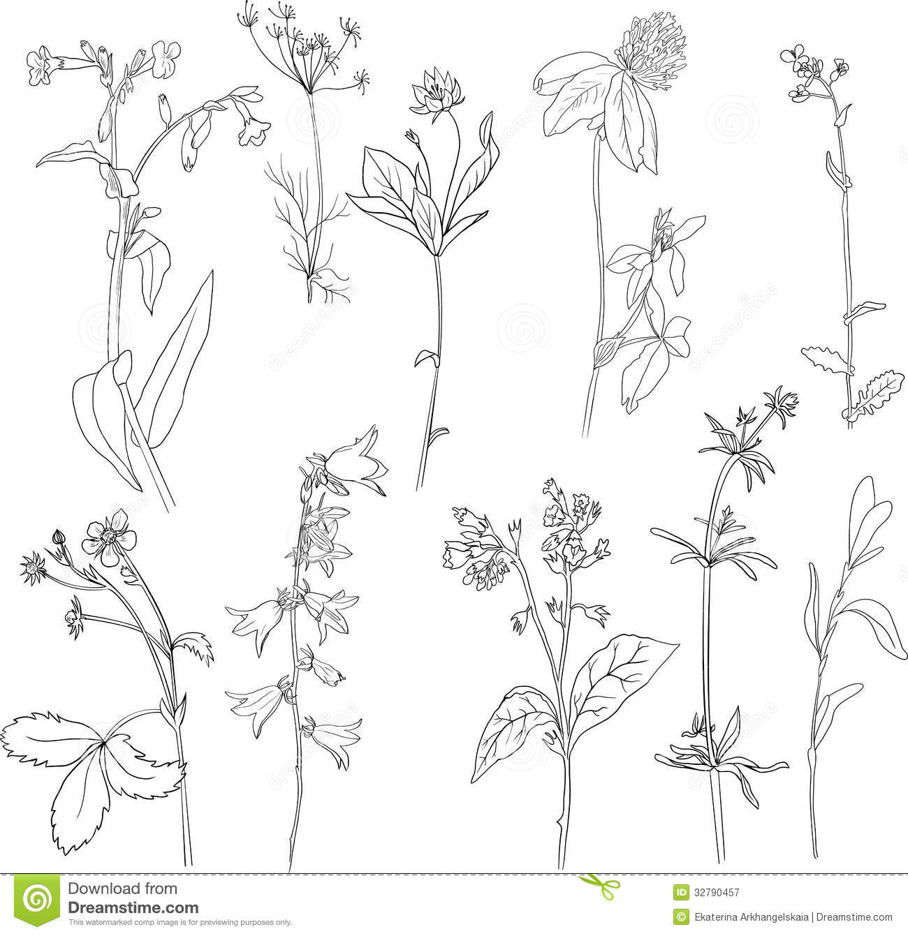 Line Art Illustration : Set of line drawing herbs royalty free stock photography