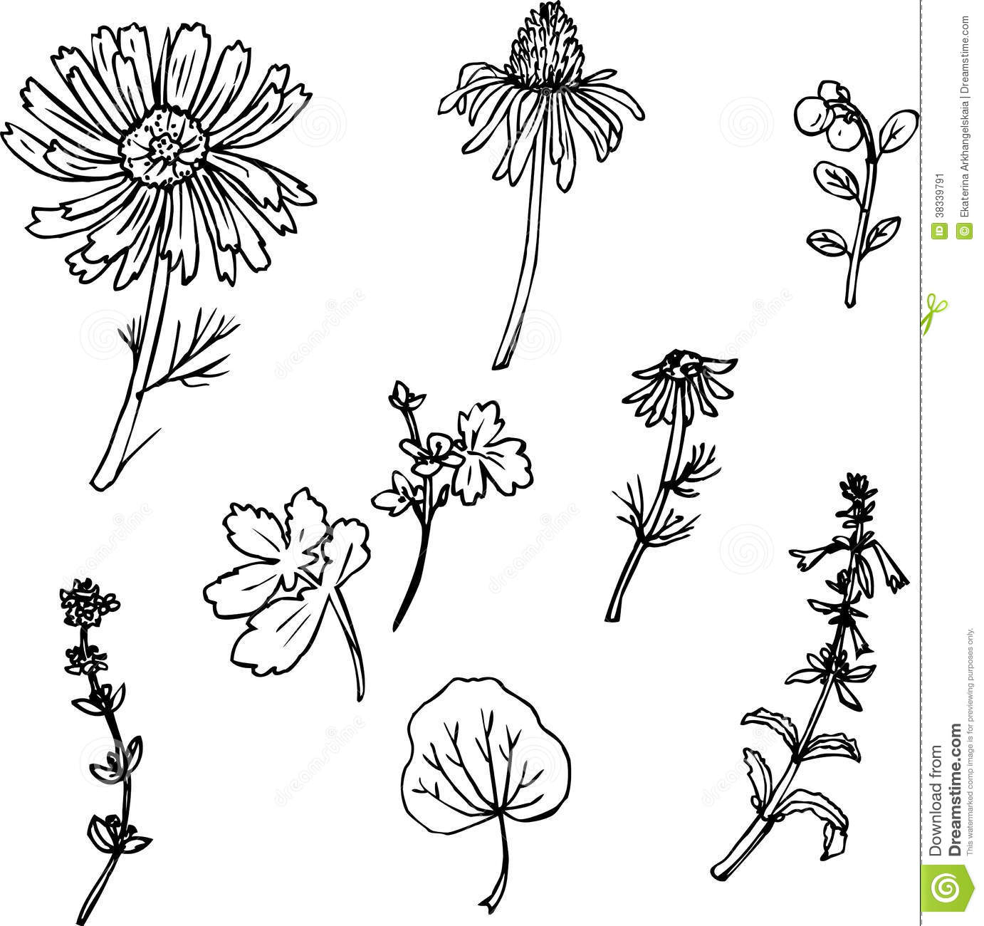 Line Art Illustration : Set of line drawing herbs stock vector illustration