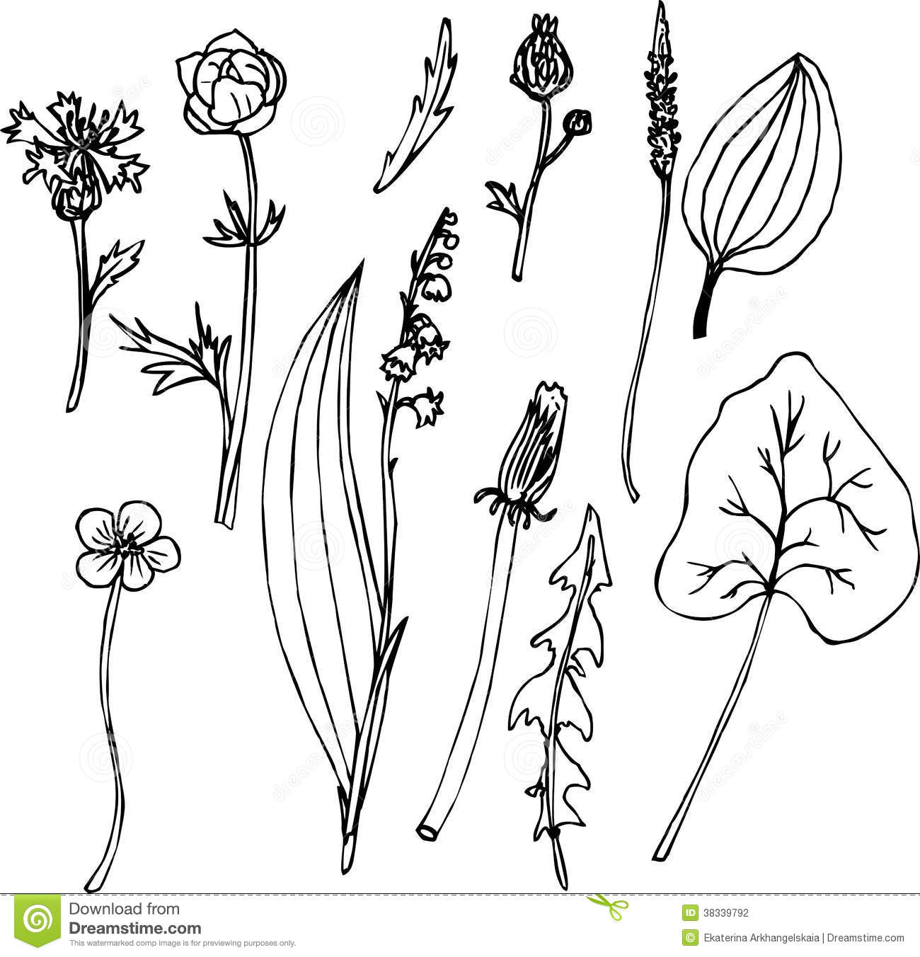 Vector Drawing Lines Html : Set of line drawing herbs stock photography image