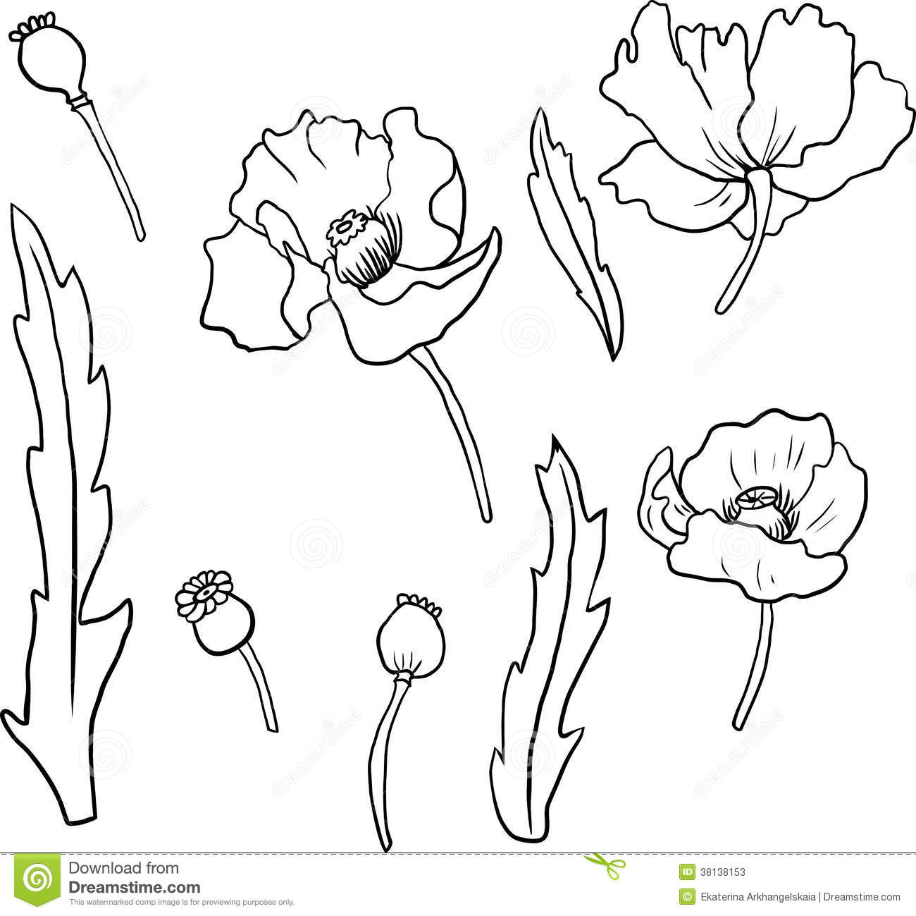 Set Of Linear Drawing Poppy Flowers Stock Vector Illustration Of