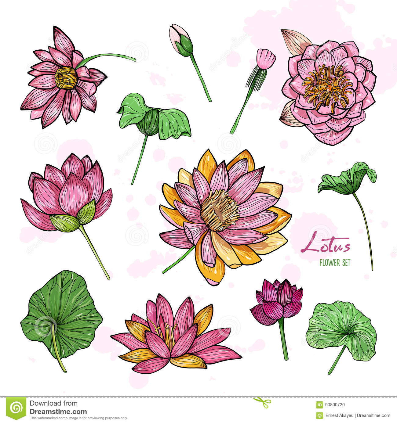 Set Of Lotus Flower In Different Views Bloomed Buds And Leaves
