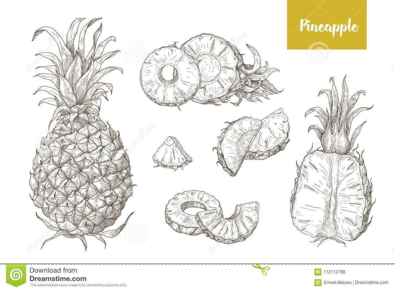 set of naturalistic drawings of whole and cut pineapples and its