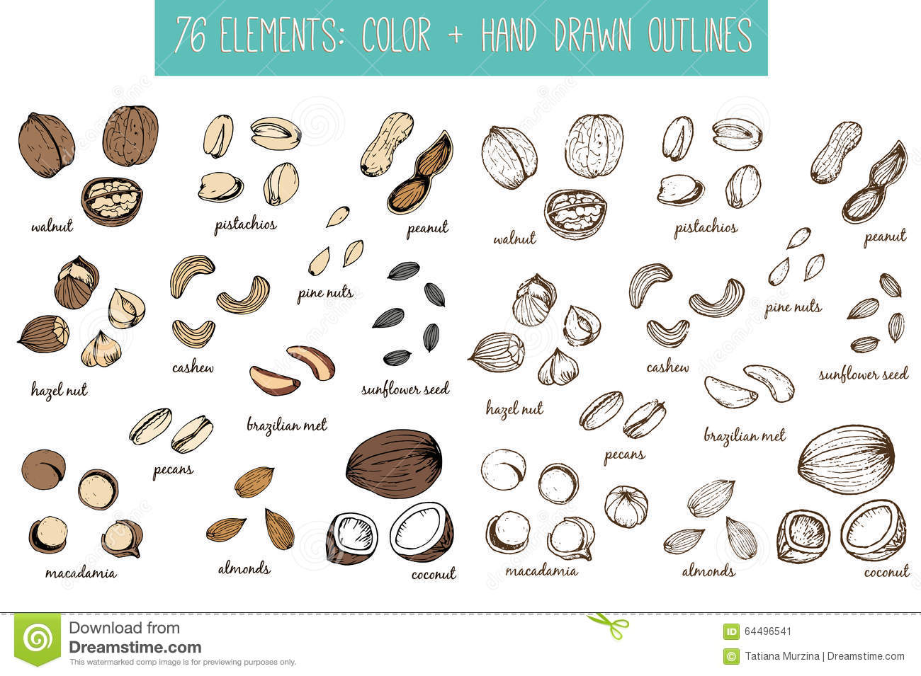 Set Of Nuts And Seeds Drawings Sketches Hand drawing