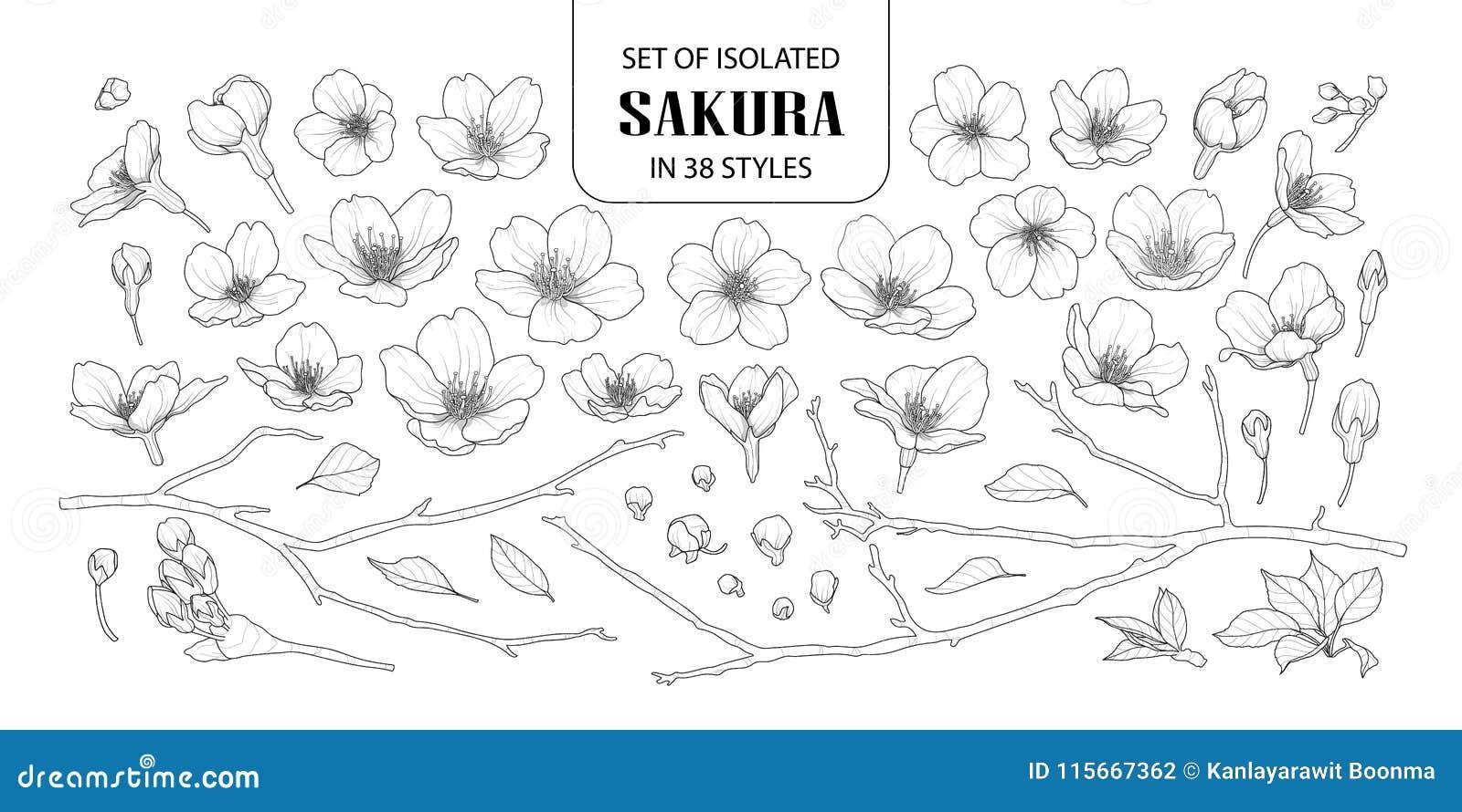 Set odosobniony Sakura w 38 stylach