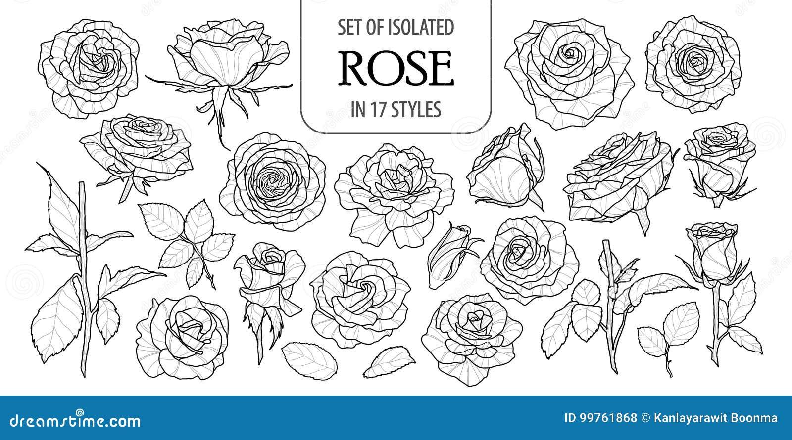 Set odosobniony wzrastał w 17 stylach Śliczna kwiat ilustracja w ręka rysującym stylu