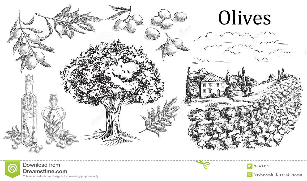 Set olive. Bottle and Jug glass of liquid with cork stopper and branch with leaves. Rural landscape with villa or farm