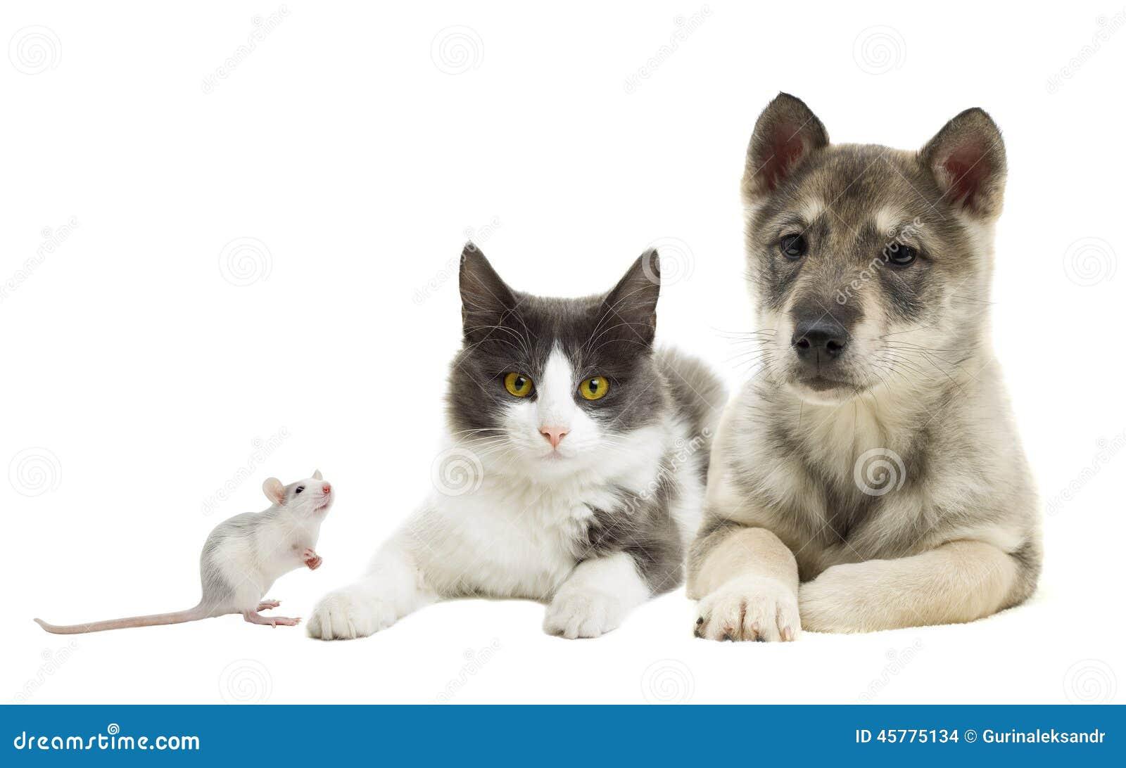 how to set free pets prodigy