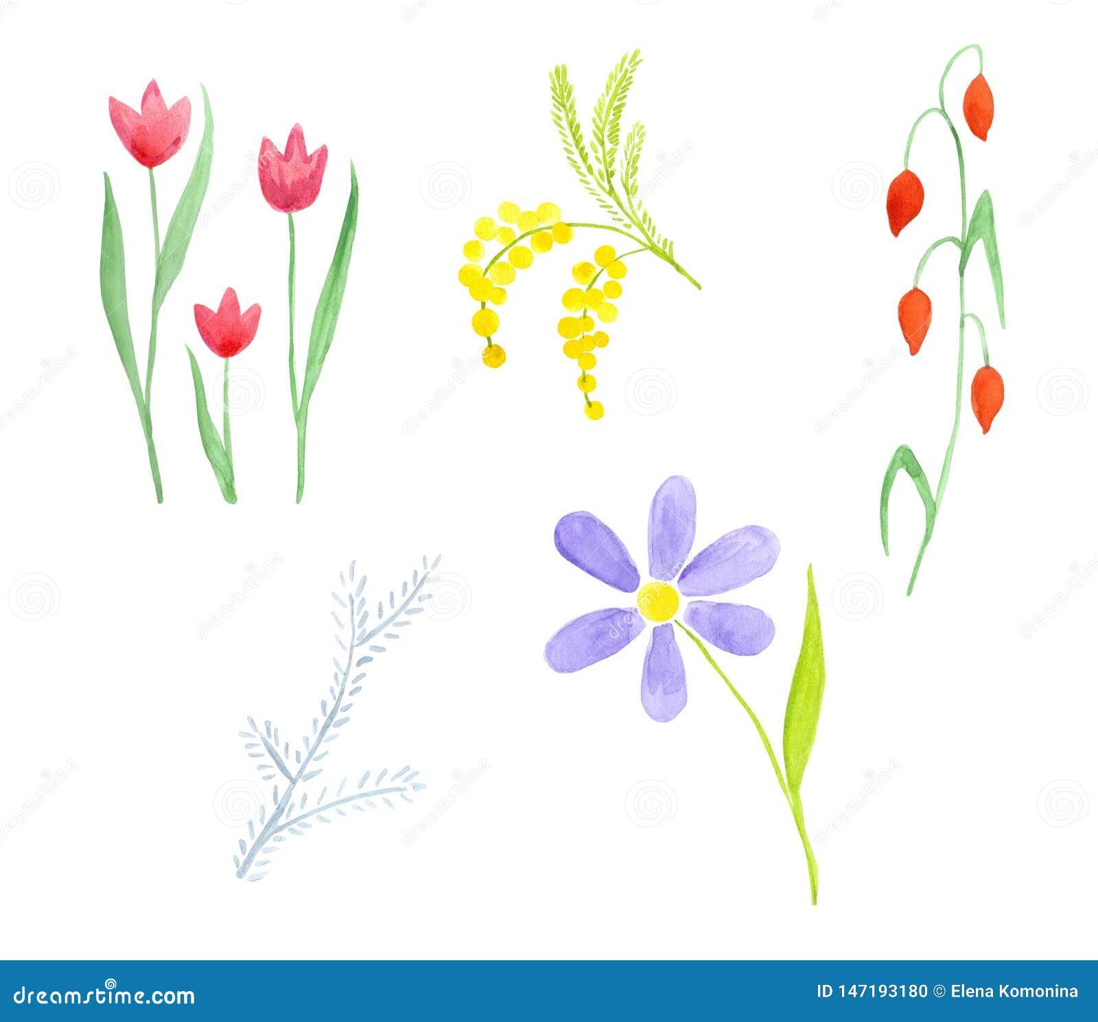 Set pięć różnych wildflowers Tulipan, mimoza, rumianek