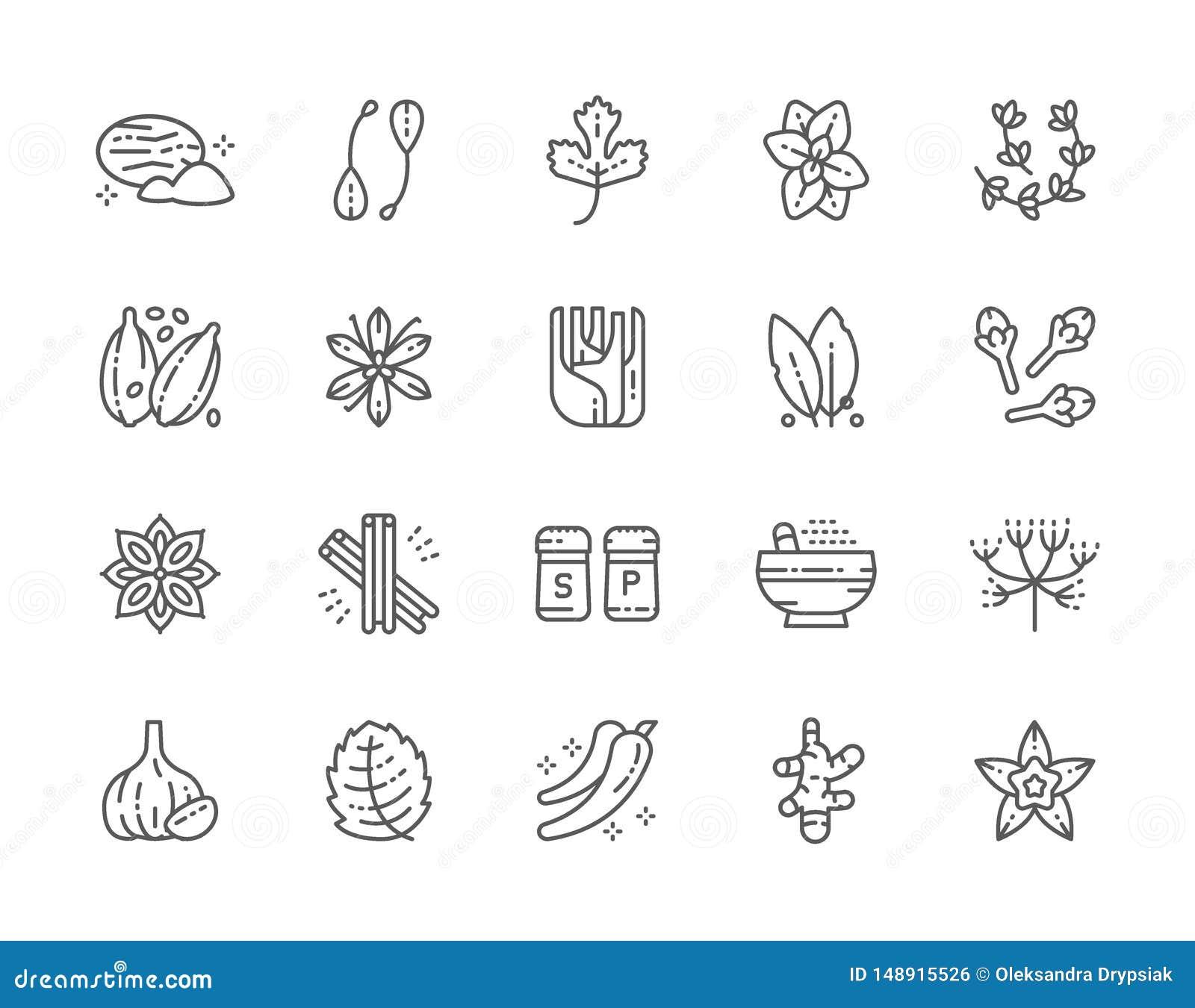 Set pikantno?ci linii ikony Nutmeg, kapary, pietruszka, Oregano, kardamon i wi?cej,