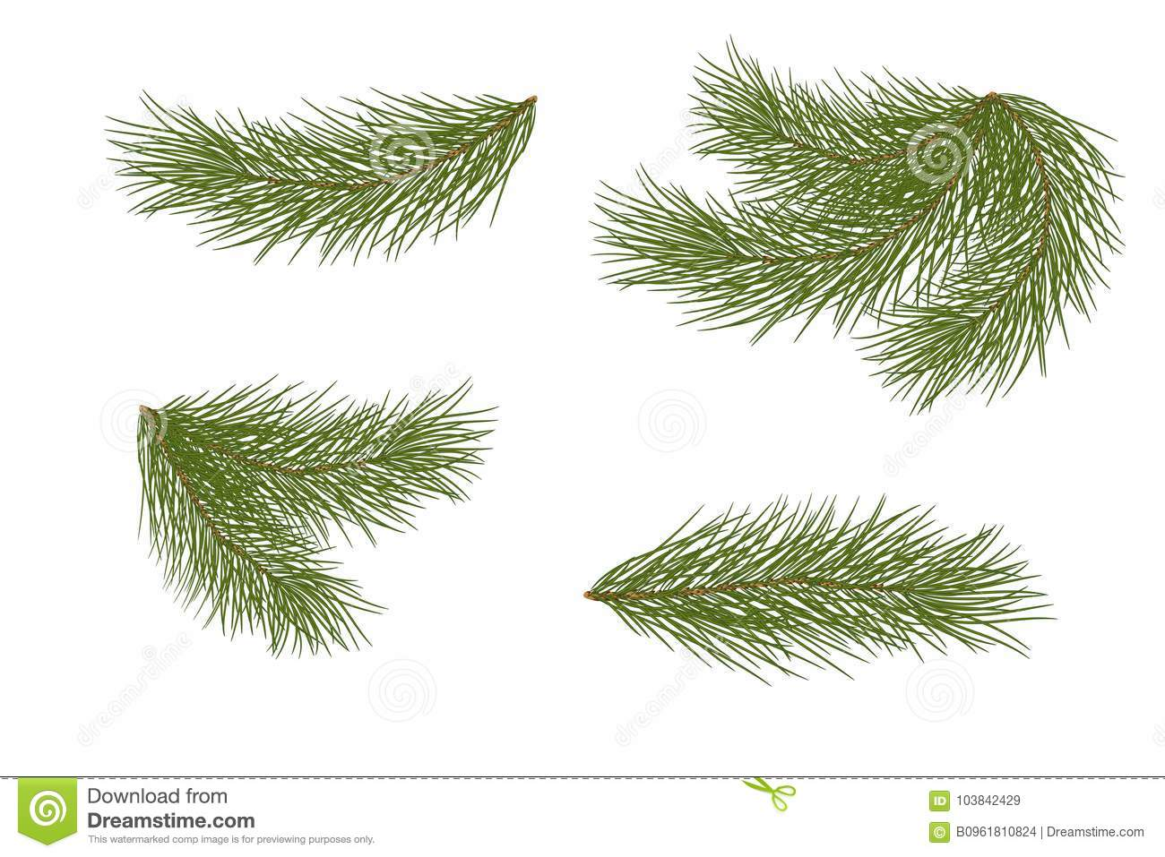 Set For Christmas Decor Drawing Pine Branches Isolated On A White Background Without Shadow Natural Decoration New Year