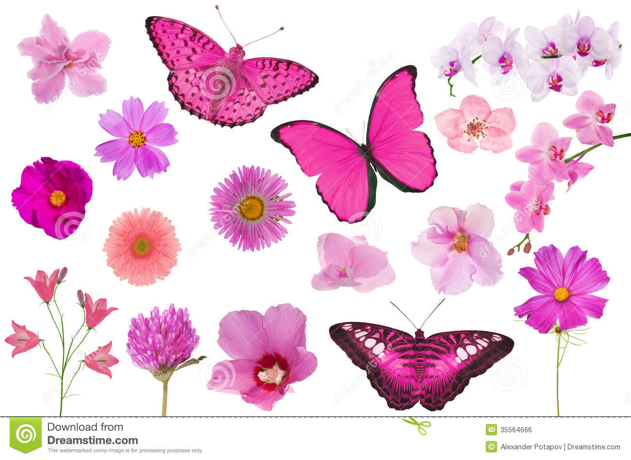 Set Of Pink Color Flowers And Butterflies Isolated On White Stock
