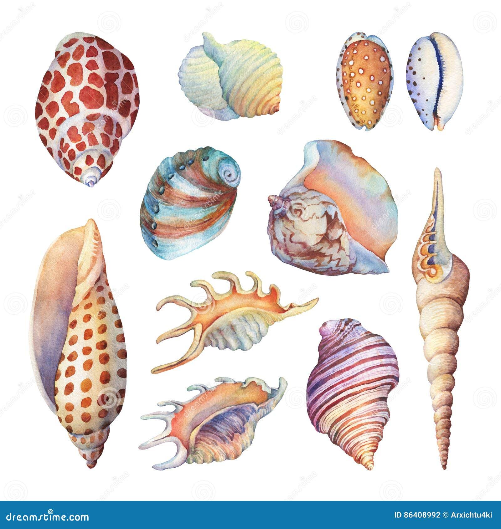 Set podwodny życie protestuje - ilustracje różnorodni tropikalni seashells i rozgwiazda