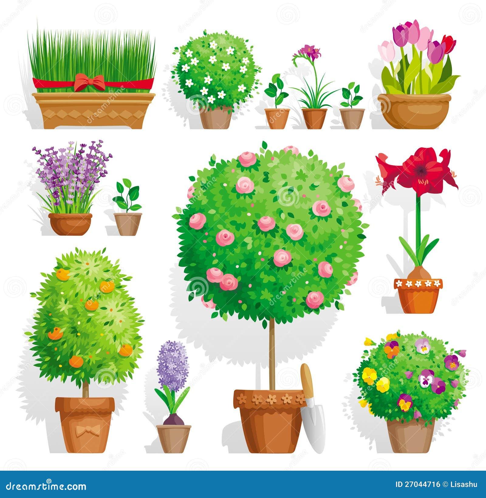 Set of pot plants