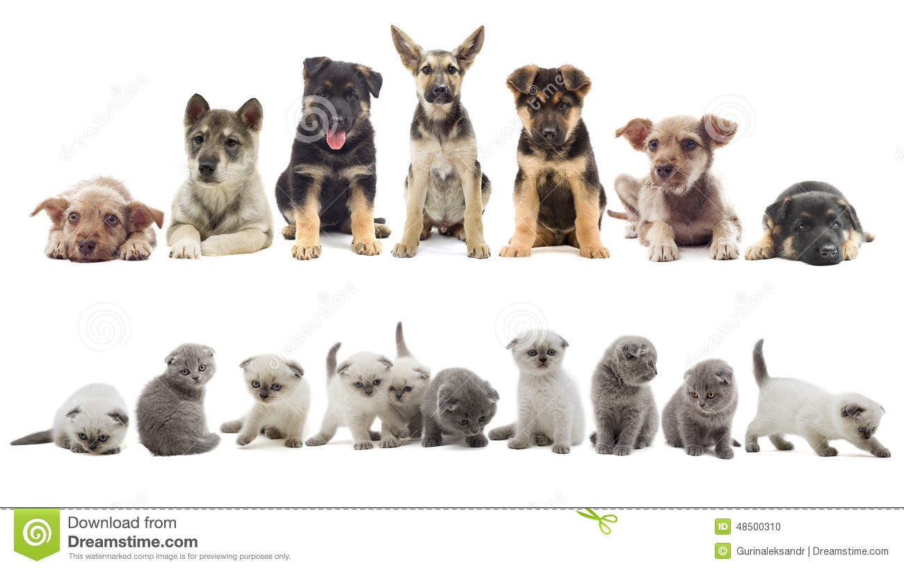 Set Of Puppy And Kitten Stock Photo Image Of Animals 48500310