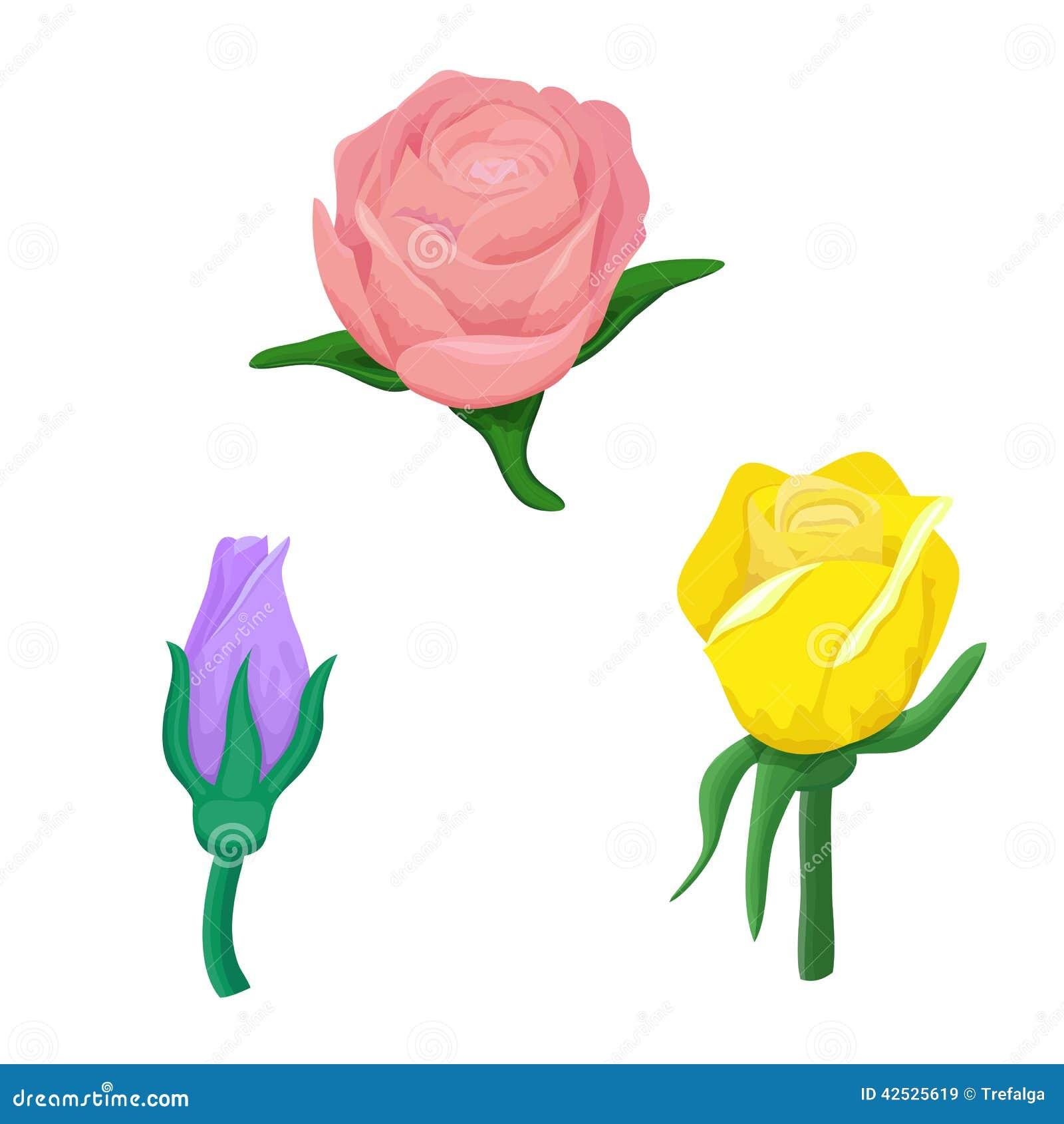 Set różani kwiaty