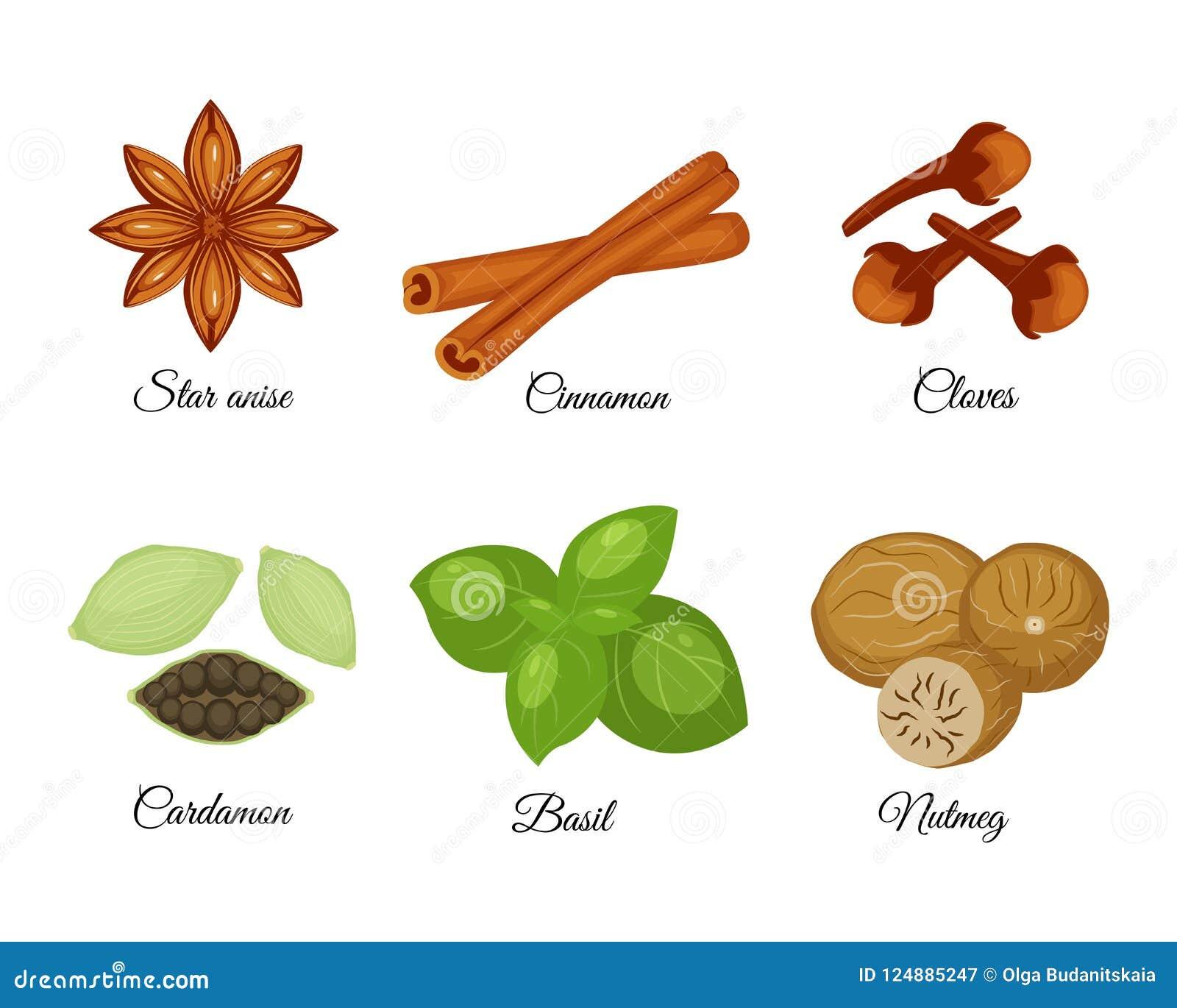 Set różne pikantność gwiazdowy anyż, cynamon, cloves, kardamonowi,