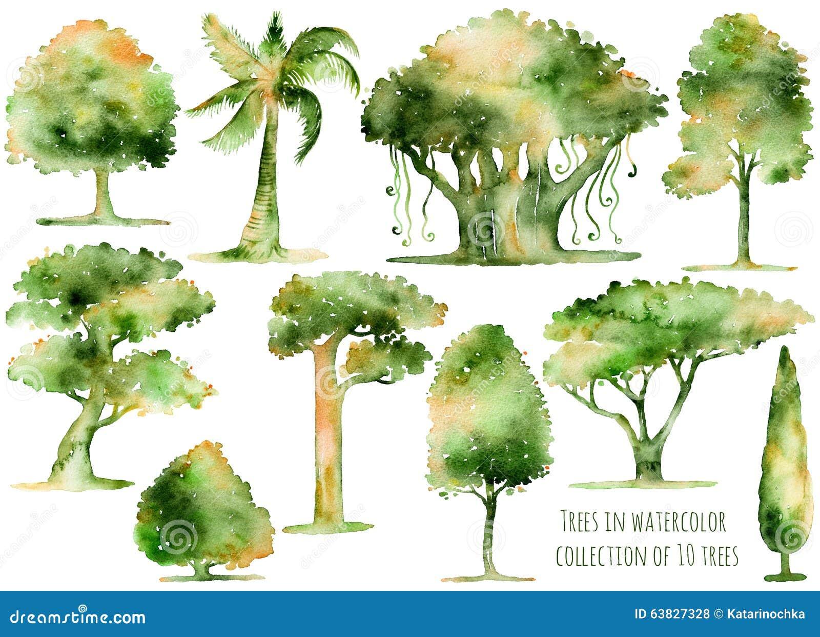 Set ręki rysujący akwareli drzewa