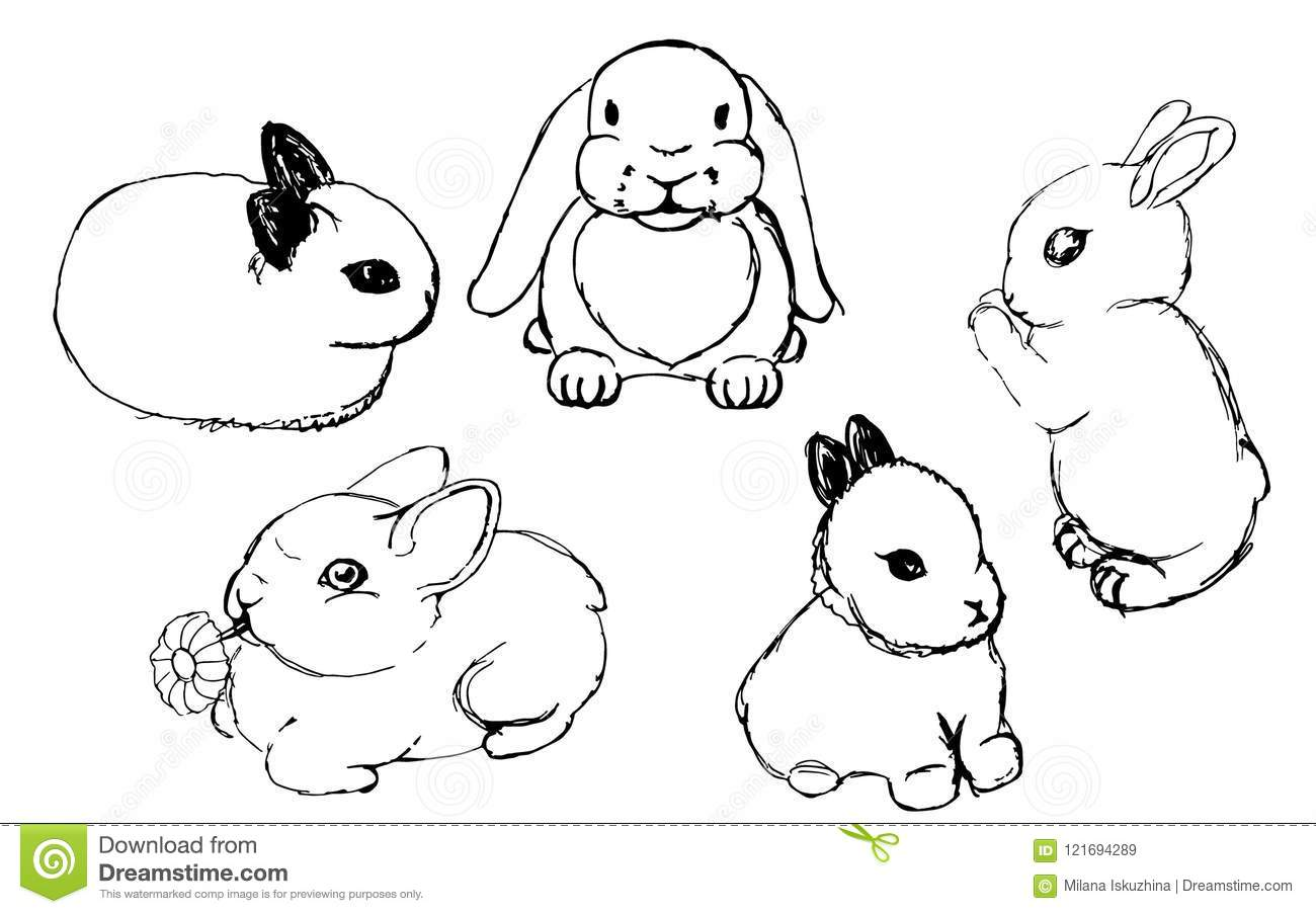 set of rabbits drawings stock vector illustration of design