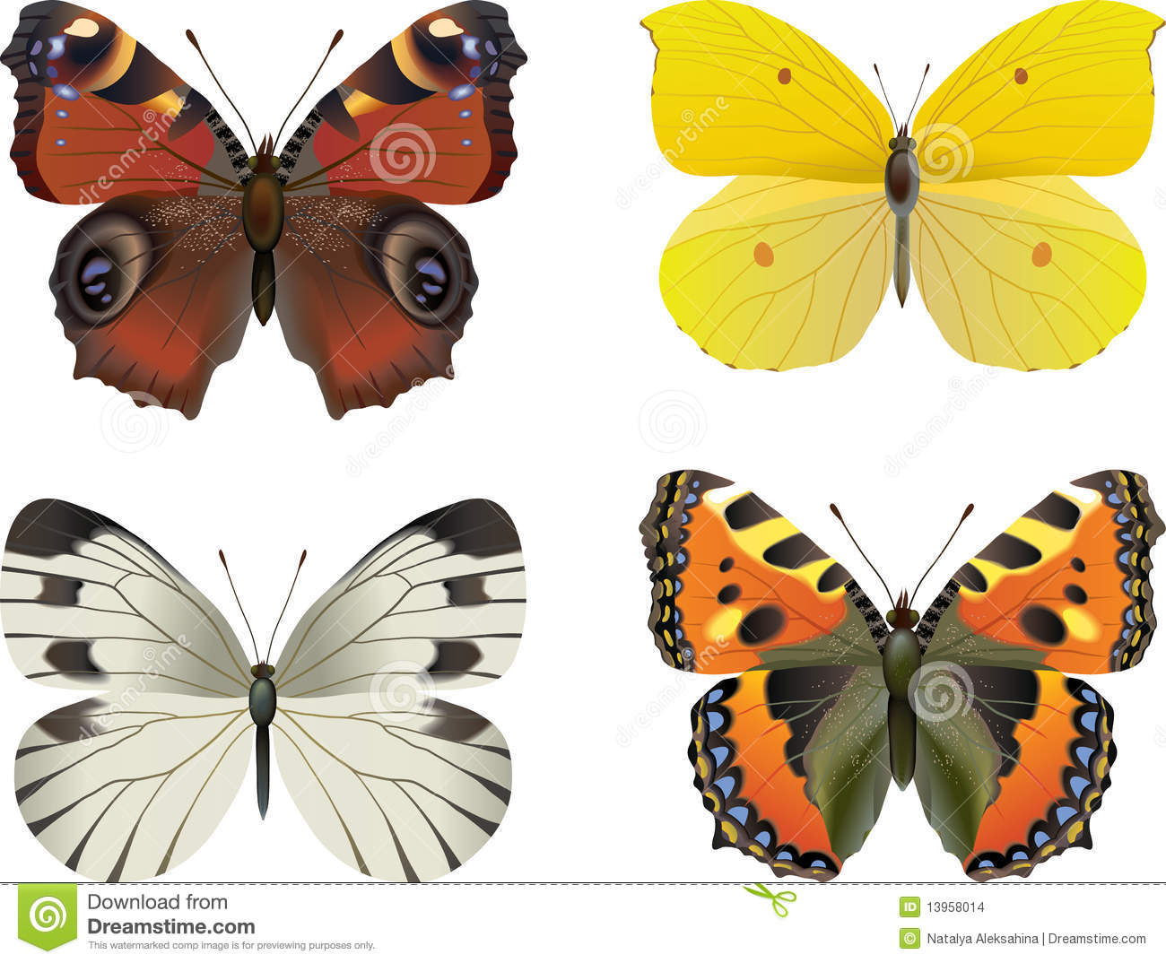 Set of realistic butterfly