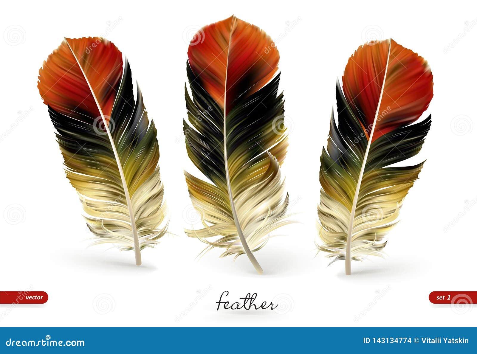 Set of realistic feathers - illustration. Isolated on white background
