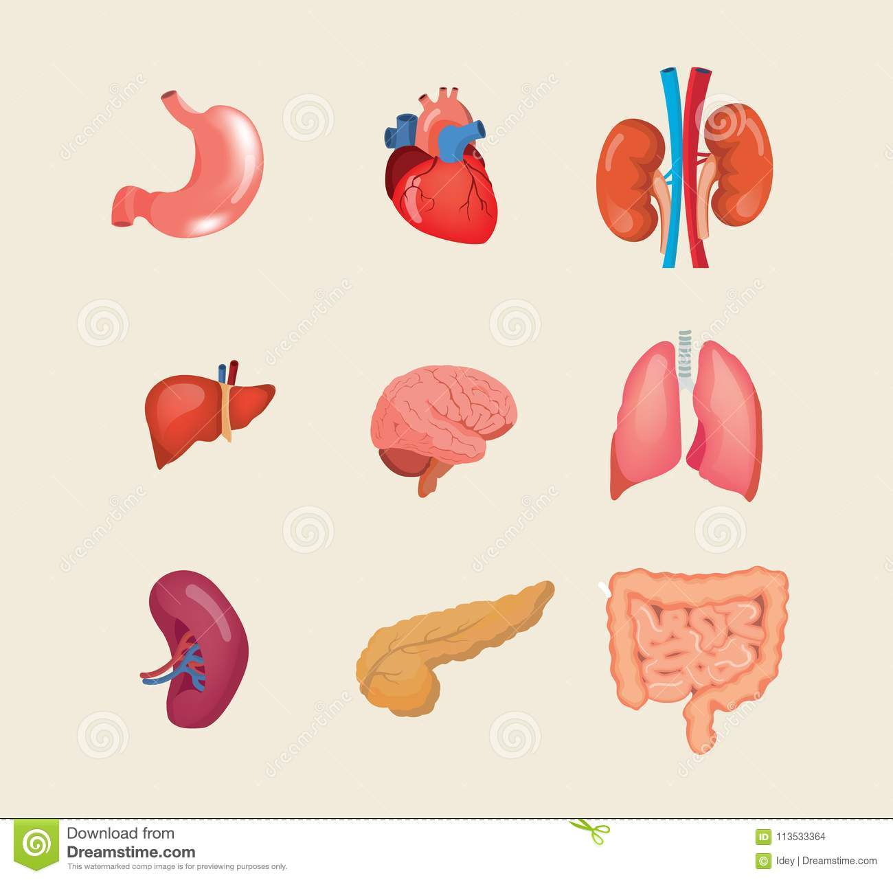 Set Realistic Human Organs. Anatomy Body, Biology, Structure ...