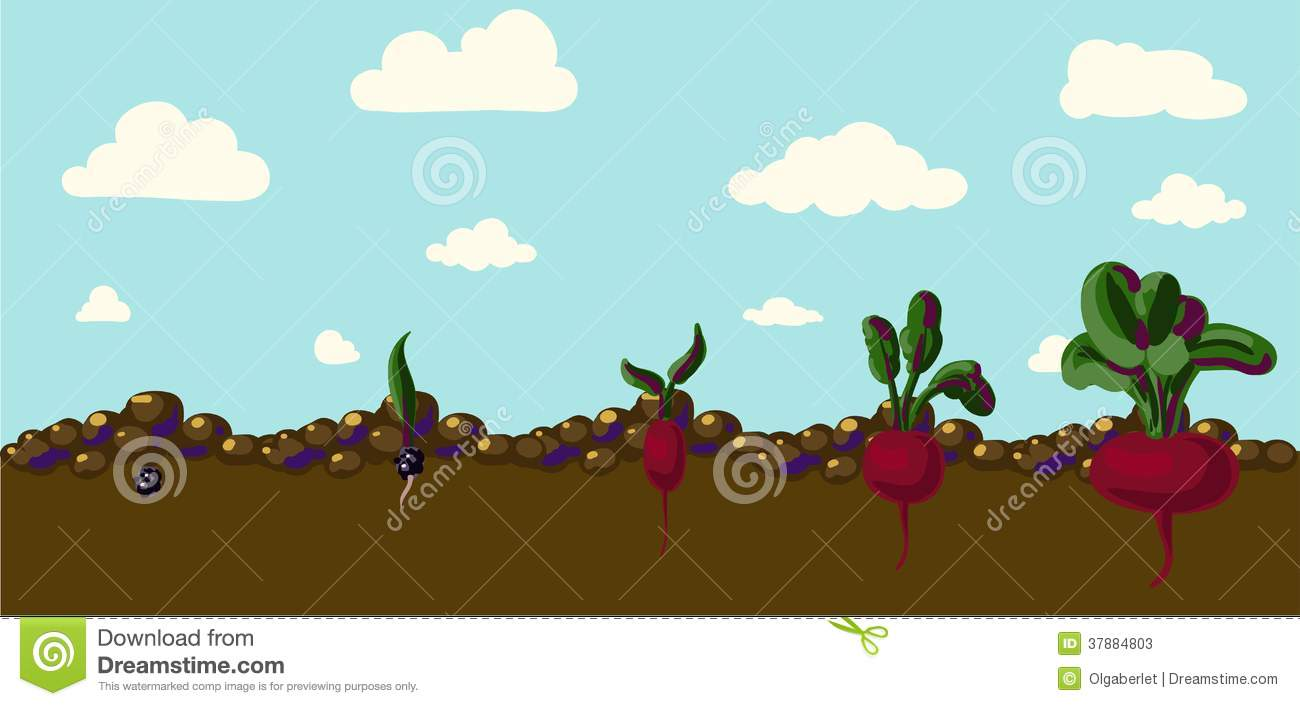 Set of realistic vegetables beets